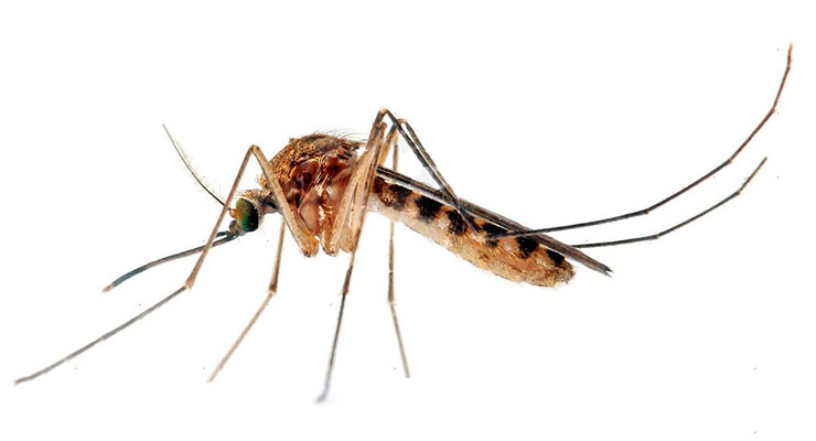 aliviar las picaduras de mosquitos